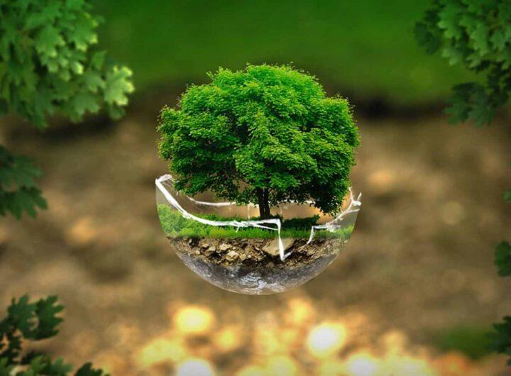 Инвестирование 2021: капиталовложения, которые принесут реальную прибыль